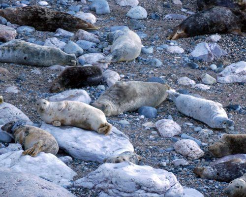 170120-lo-33-grey-seal-poses-1