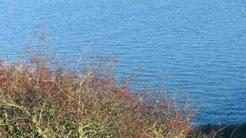 170120-lo-88-hawthorn-berries-and-sea-1a