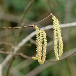 180218-BEWT-1316-Catkins & flower
