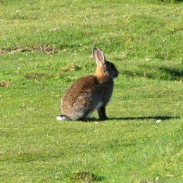 180425-GO-1716-Bunny 1