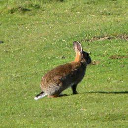 180425-GO-1716-Bunny3