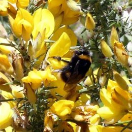 190324-BE (160)-Bumblebee
