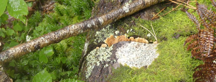 Forest Fungus Foray