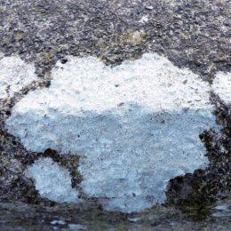 200127-KBLNR- (55a)-Lichen on path wall