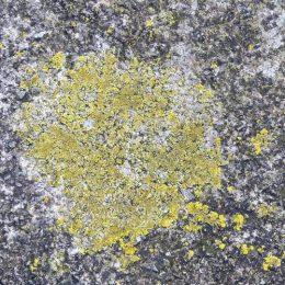 200127-KBLNR- (58)-Lichen on sea wall