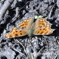 MAR23/20-1030-Bryn Euryn woodland path