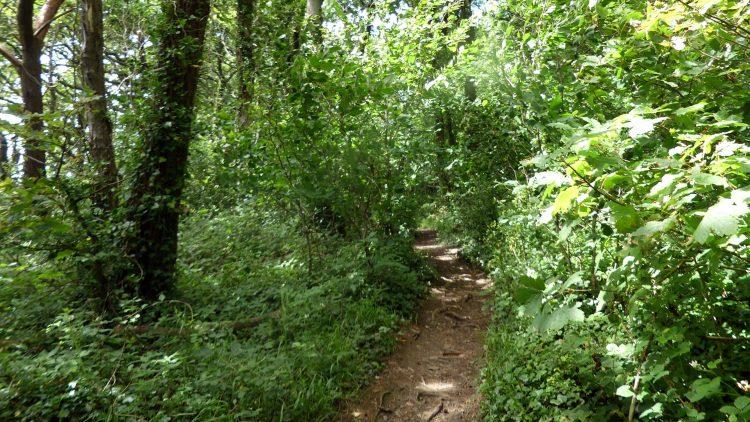 Midsummer Woods